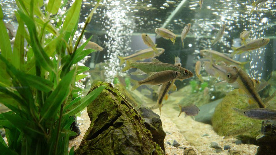 Aquarium water