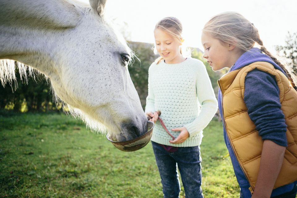 Young girls feeding a horse