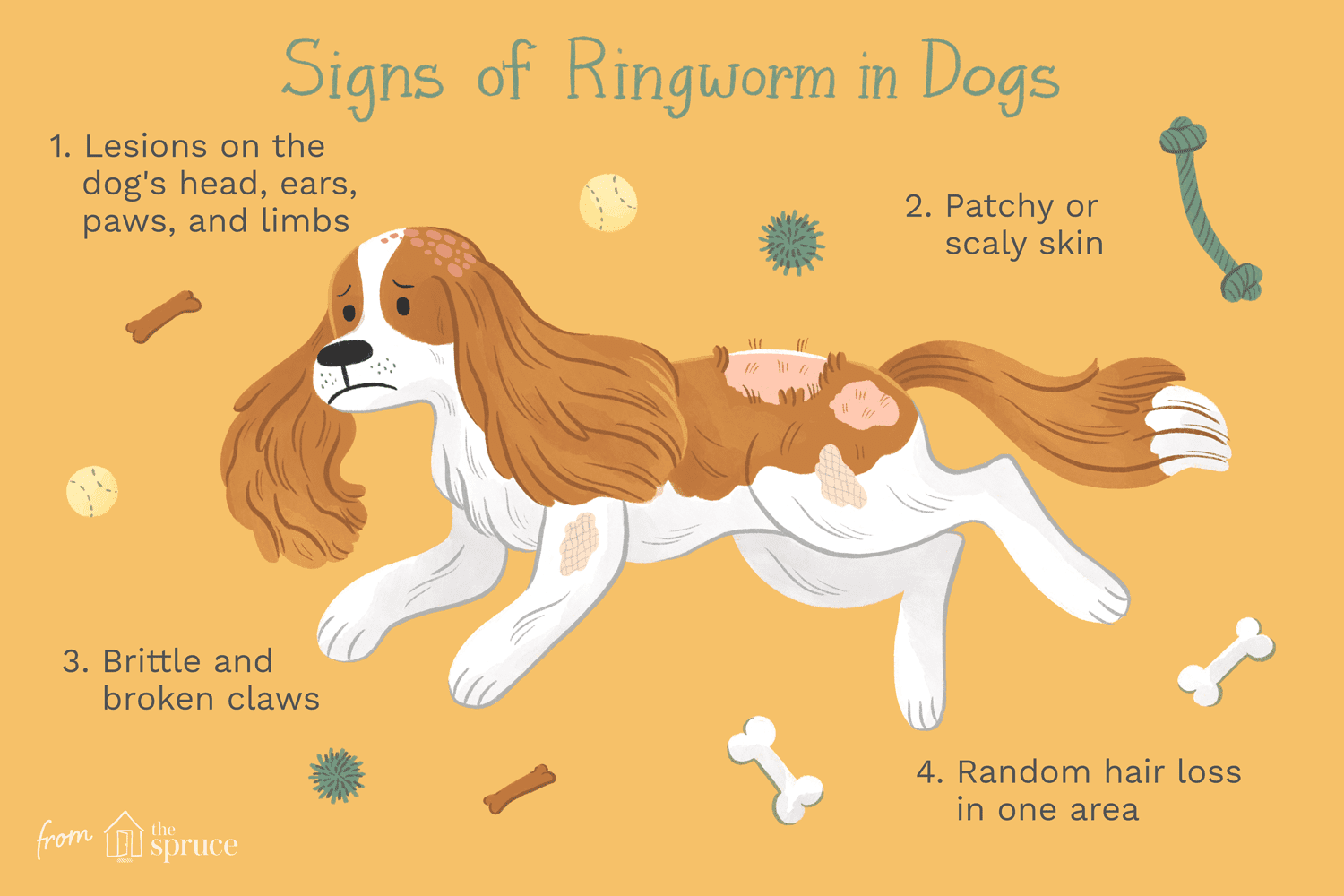 How to Treat Ringworm in Dogs