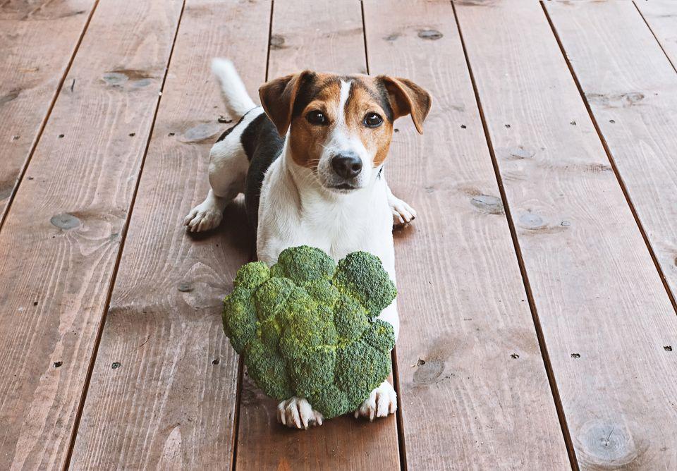 perro sentado con brócoli