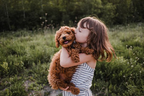 Puppy turning away from girl's kisses