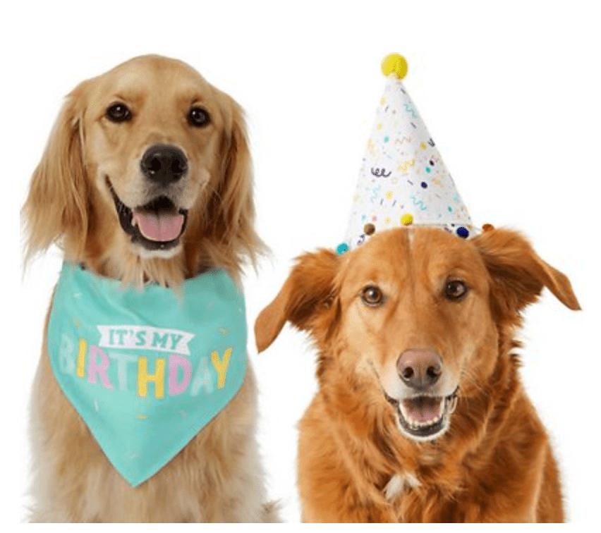 Frisco Birthday Bandana + Confetti Dog Hat