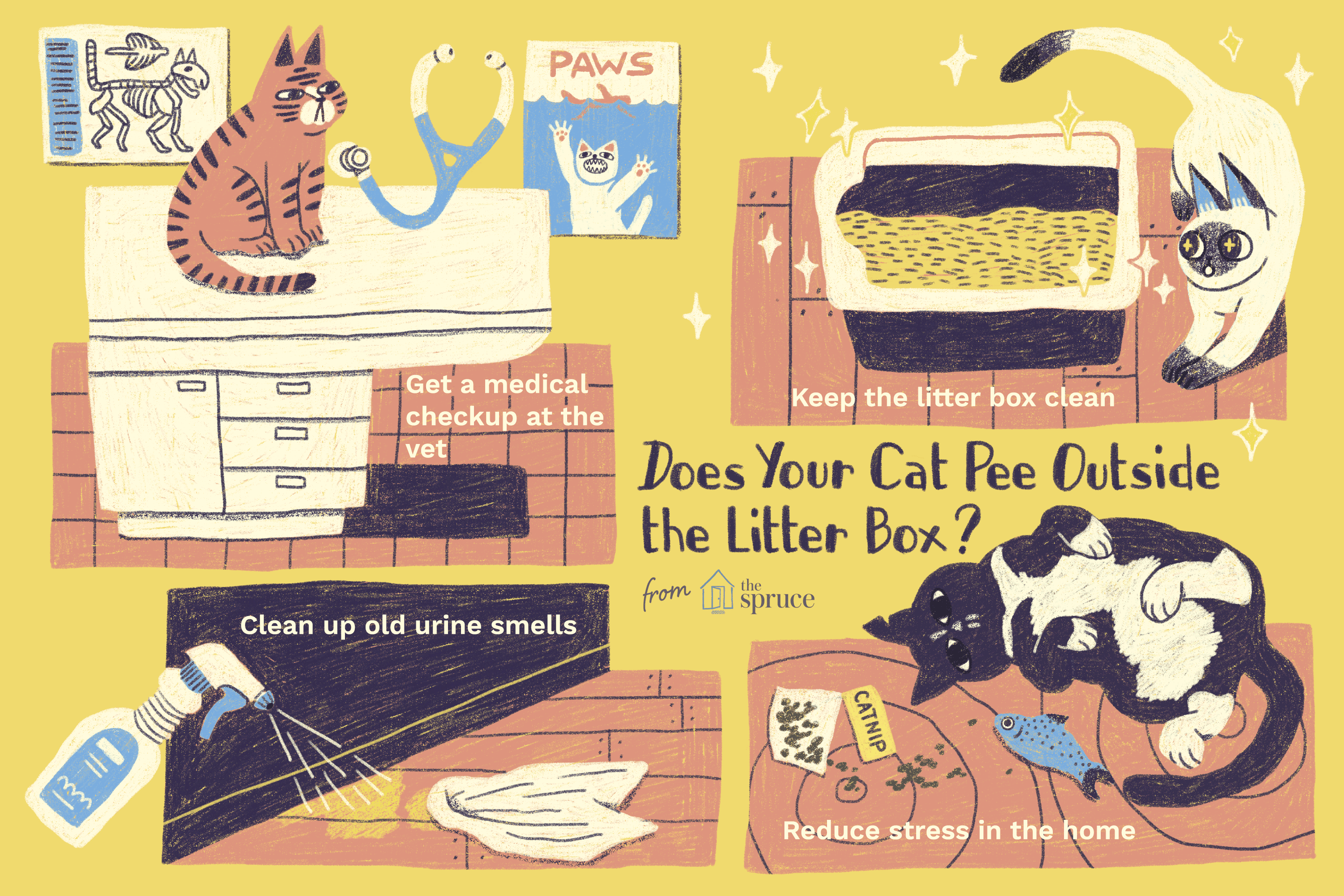 Reasons Why Cats Pee Outside the Litter Box and How to Stop It