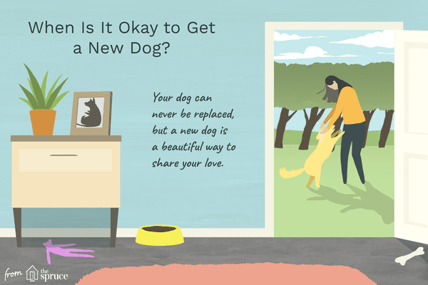 when should you get a new dog after your dog dies