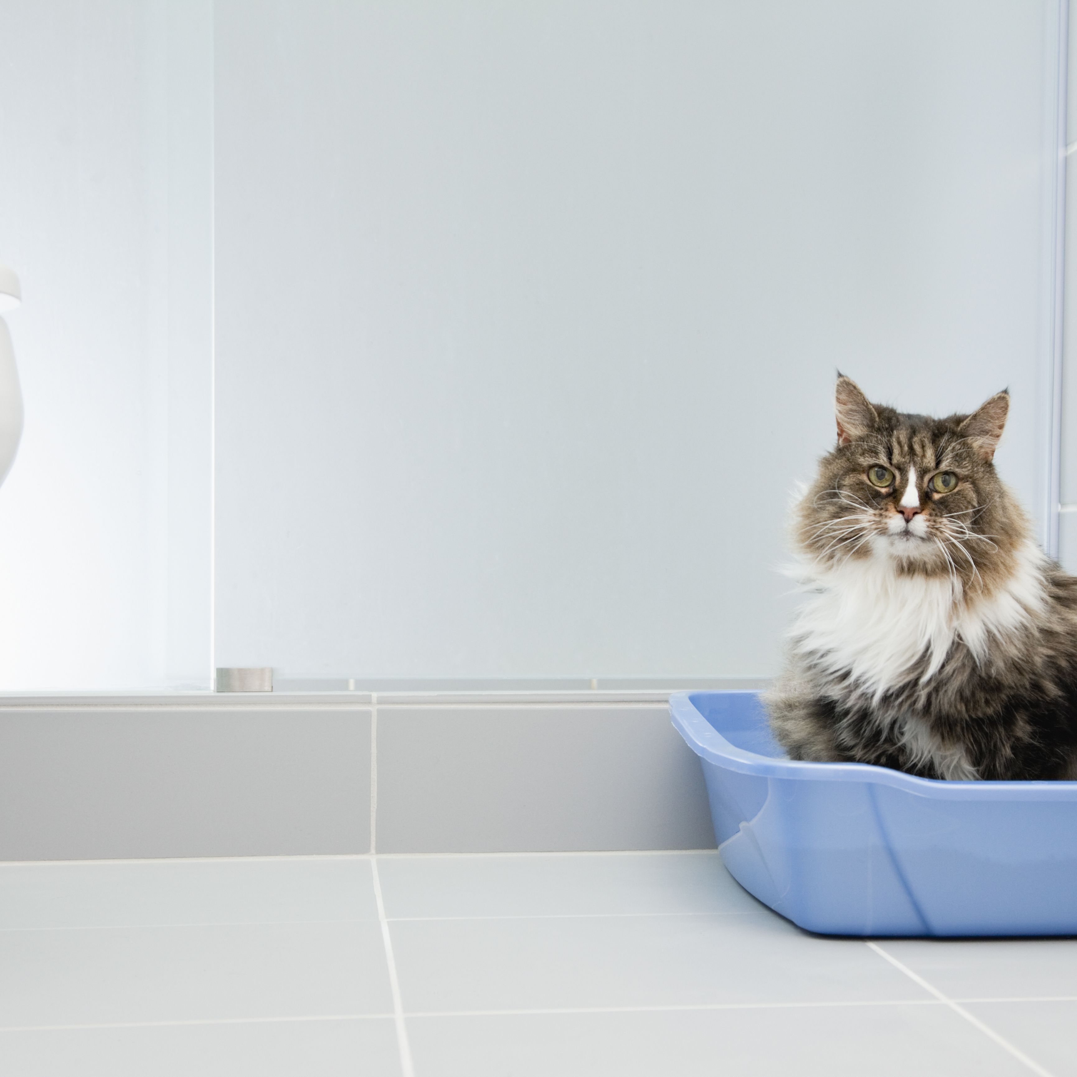 The 7 Best Cat Litters of 2019