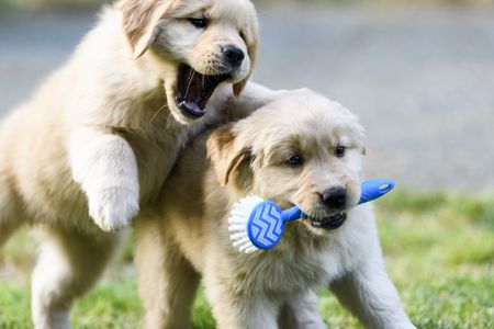 Best Chew Toys For Puppies Of 2019