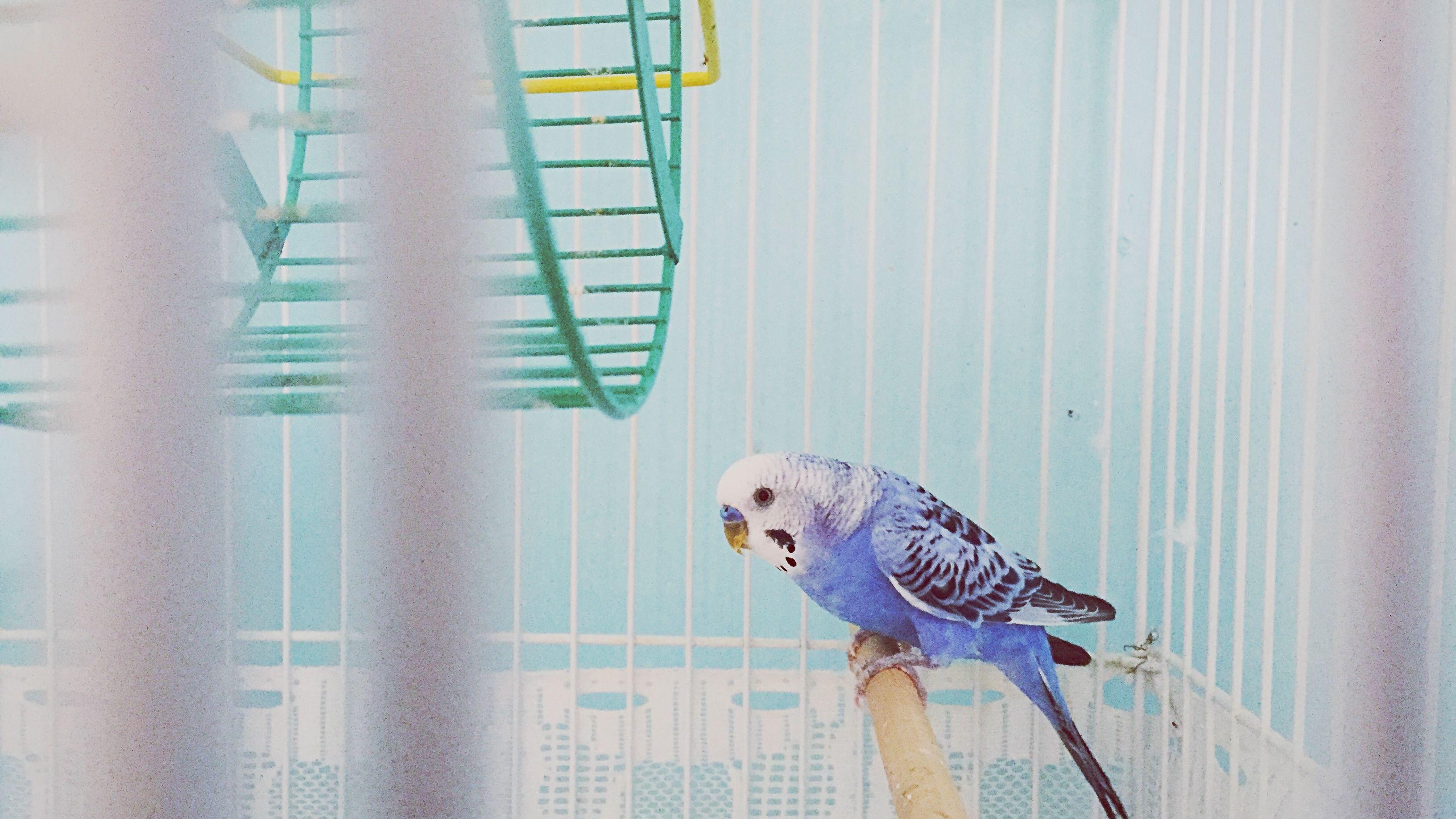 5 Types of Pet Birds That Talk