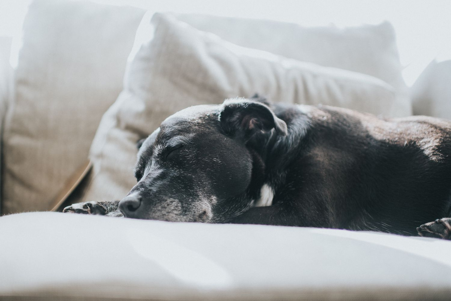 why do dogs lose weight as they get older