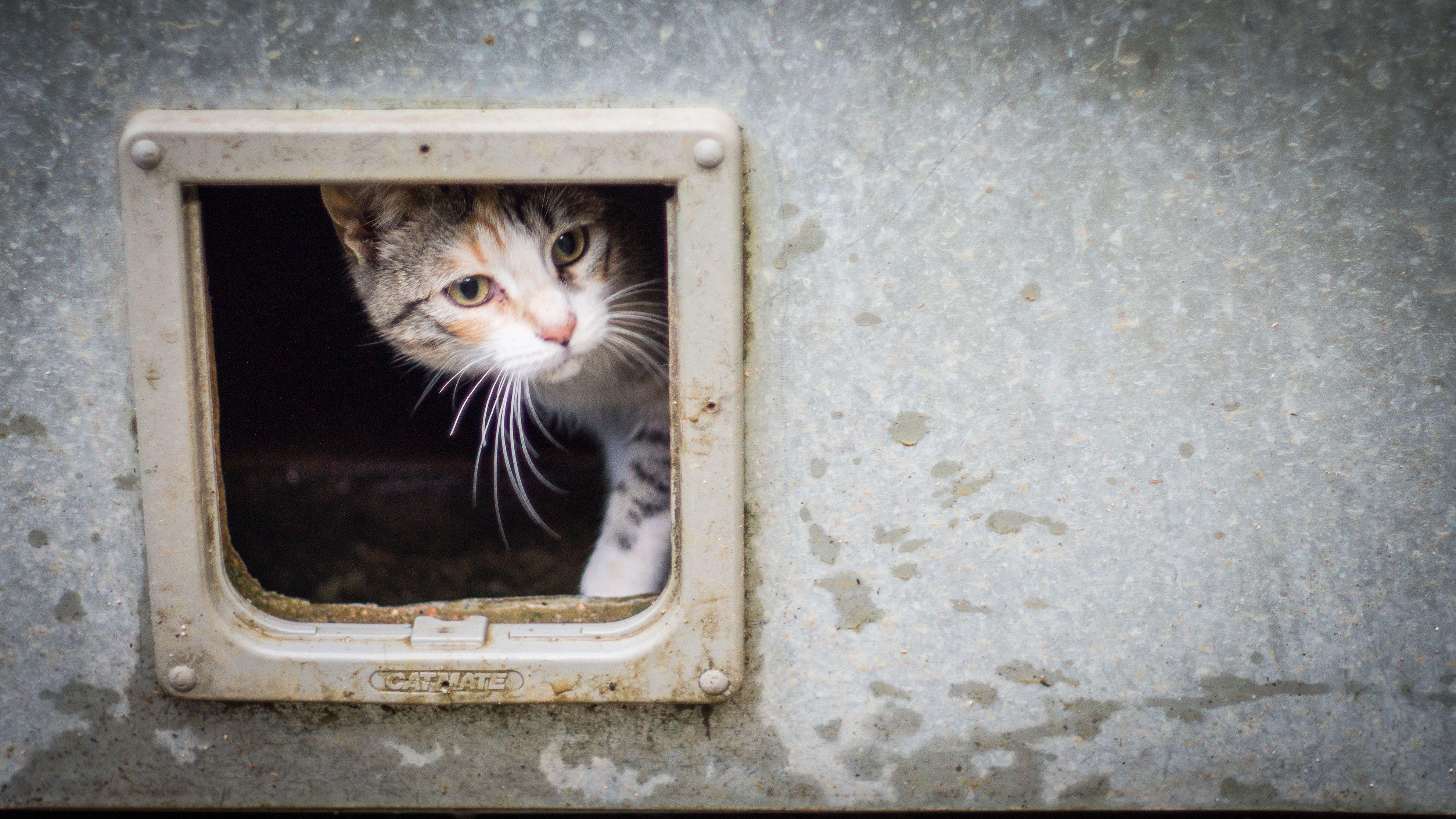 The 7 Best Cat Doors of 2019