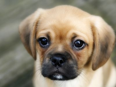 What To Do If Your Puppy Is Vomiting