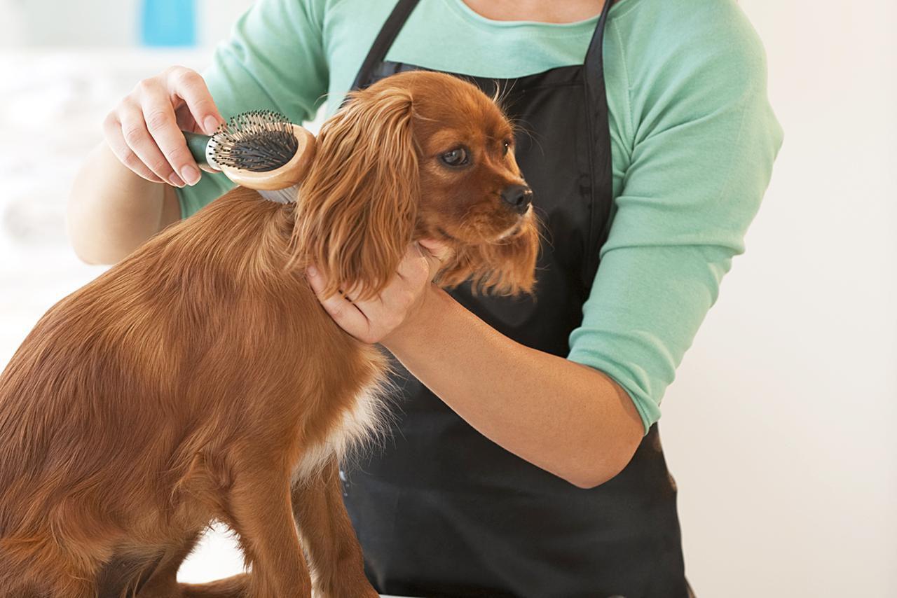 groomer brushing dog