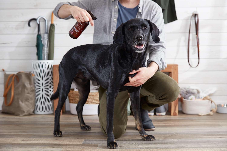 perro y dueño con el lavado de abeto sin agua para mascotas