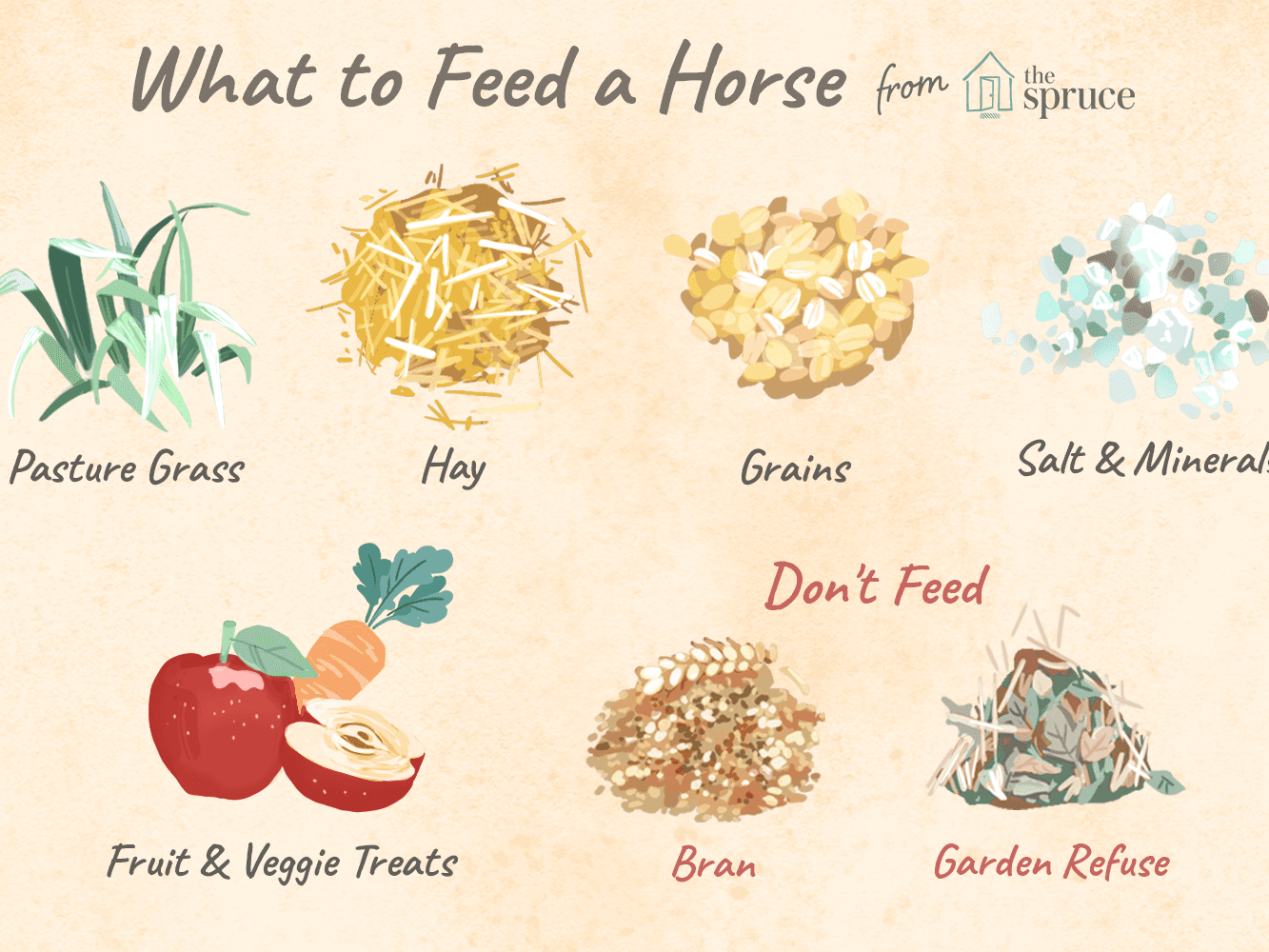Common Feeds for Horses