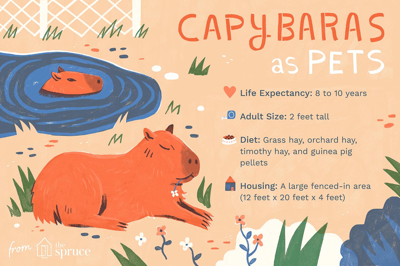 capibaras como ilustración de mascotas