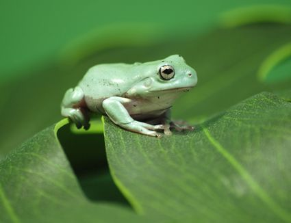 how to take care of a pet frog
