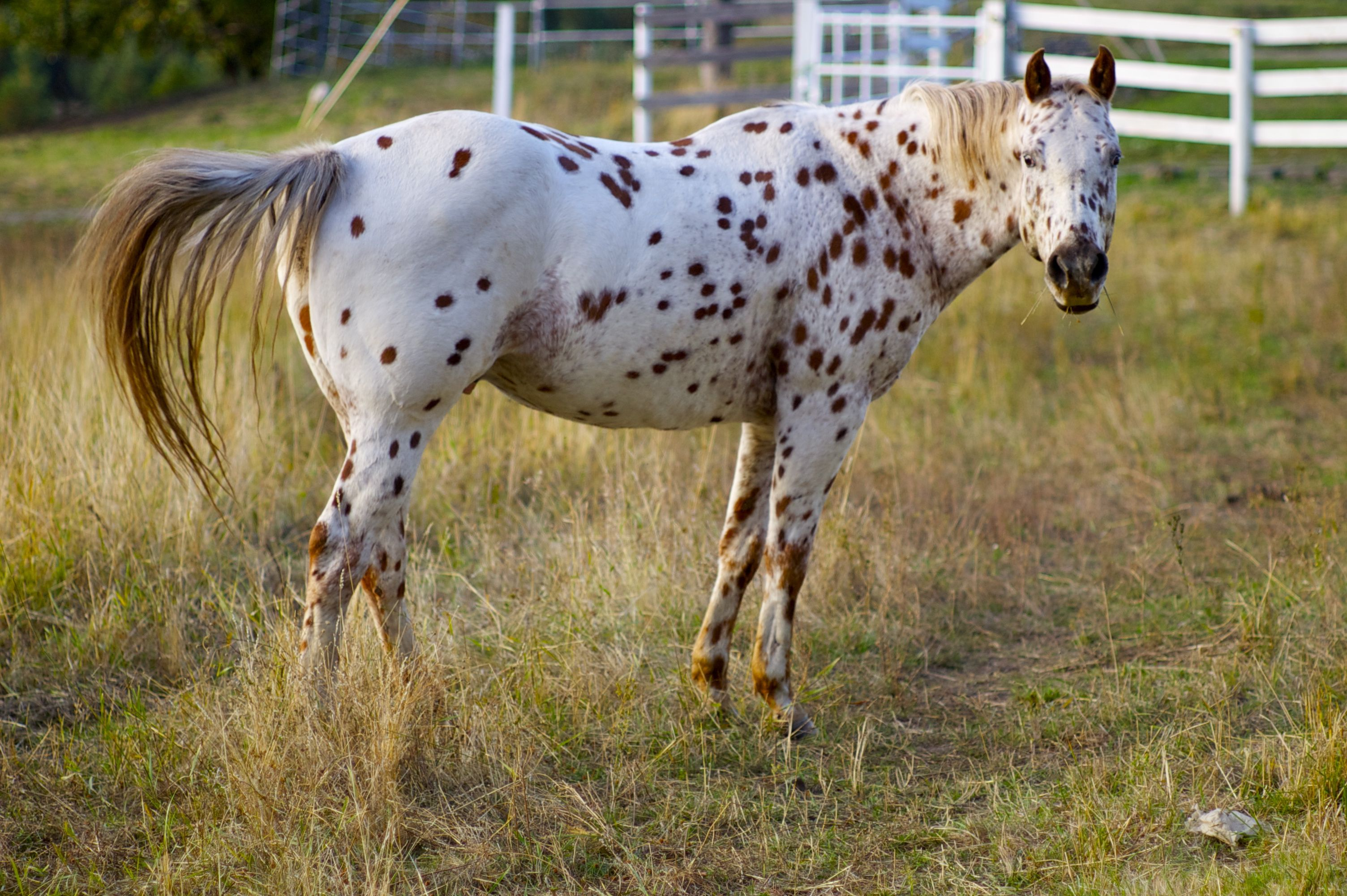 Top Mistakes People Make When Buying a Horse