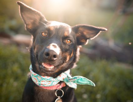 Black mutt dog outdoor portrait