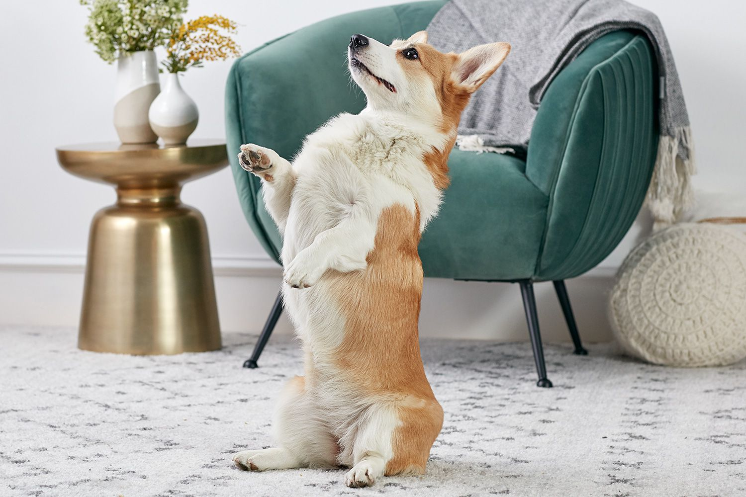 Easy And Fun Dog Tricks To Train Your Dog
