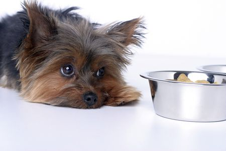 How to Treat Liver Disease in Dogs