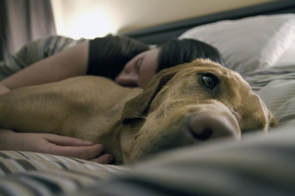 Owner cuddling with their dog