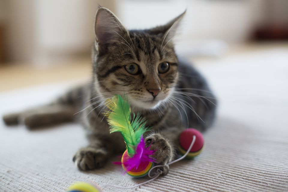 playing kitten