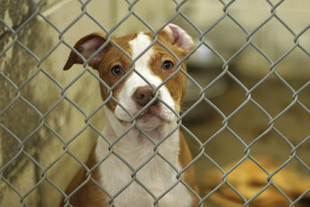 How To Train Your Shelter Or Rescue Dog