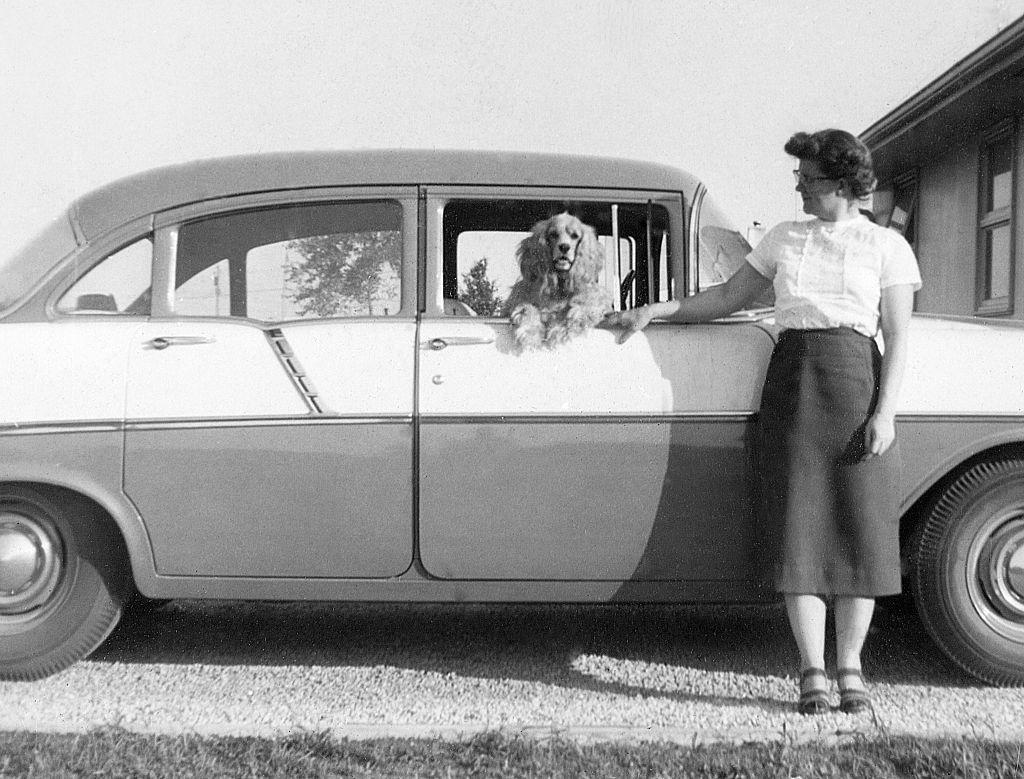 American Cocker Spaniel 1960