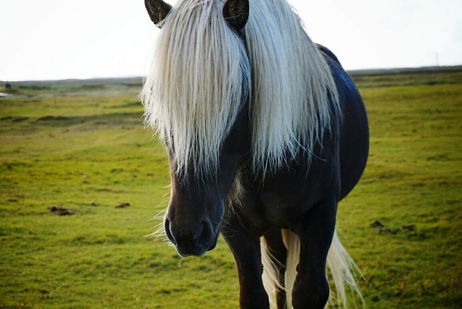 A horse with a white mane