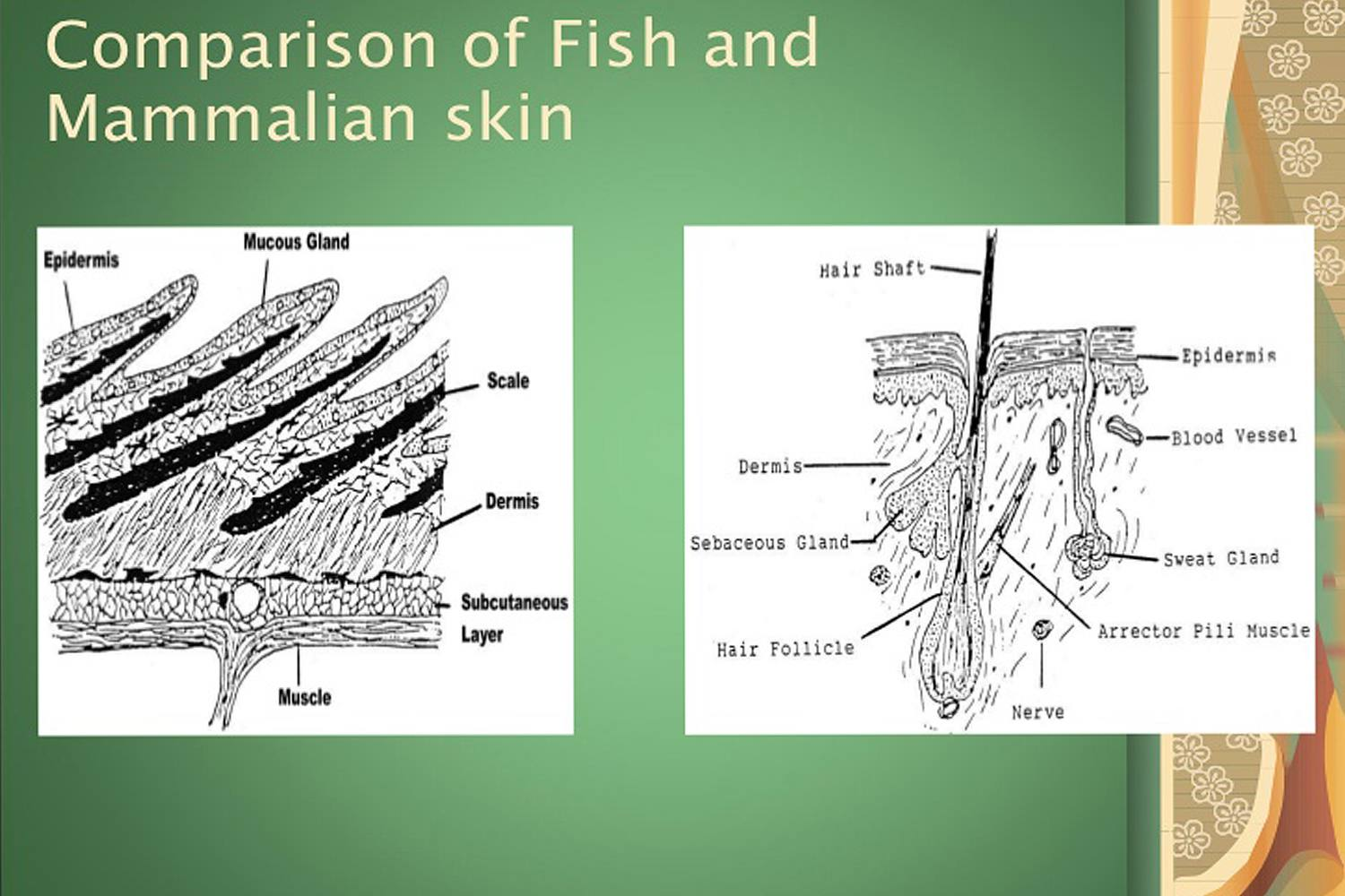 The Anatomy Of Fish How Are All Fish The Same