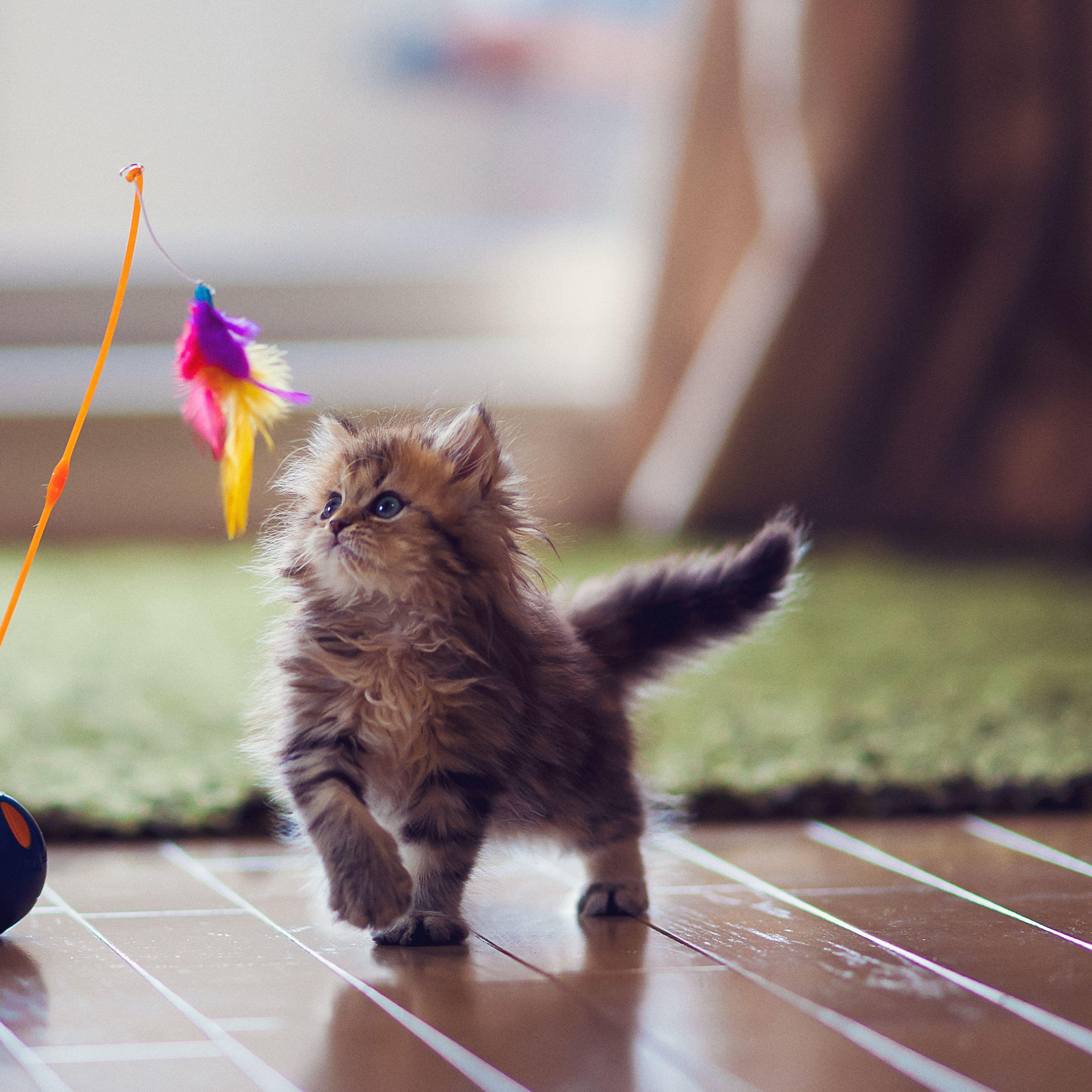 Kitten Development From 6 To 12 Weeks