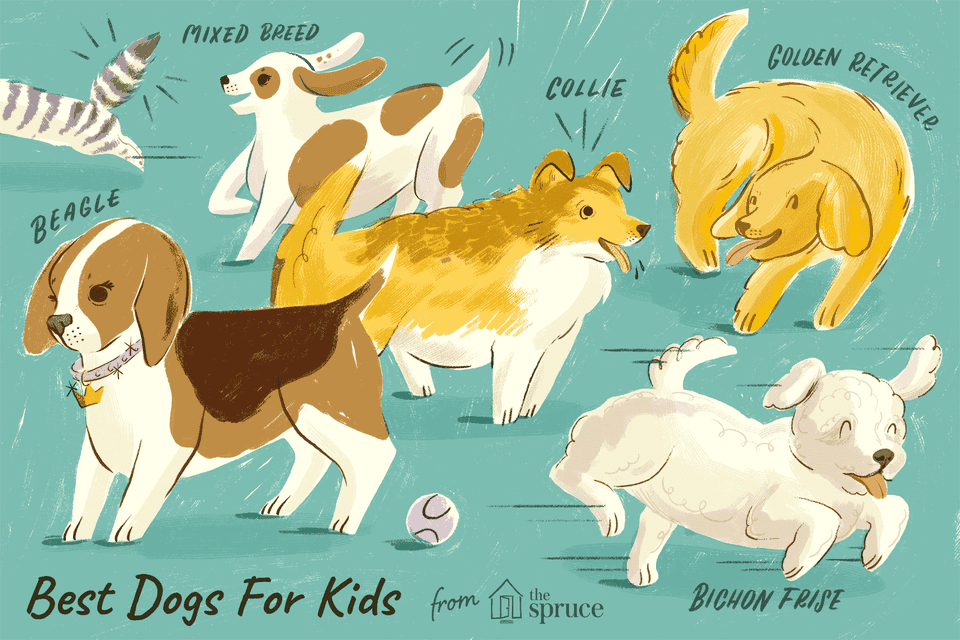 An illustration of different breeds of dogs that are best for kids