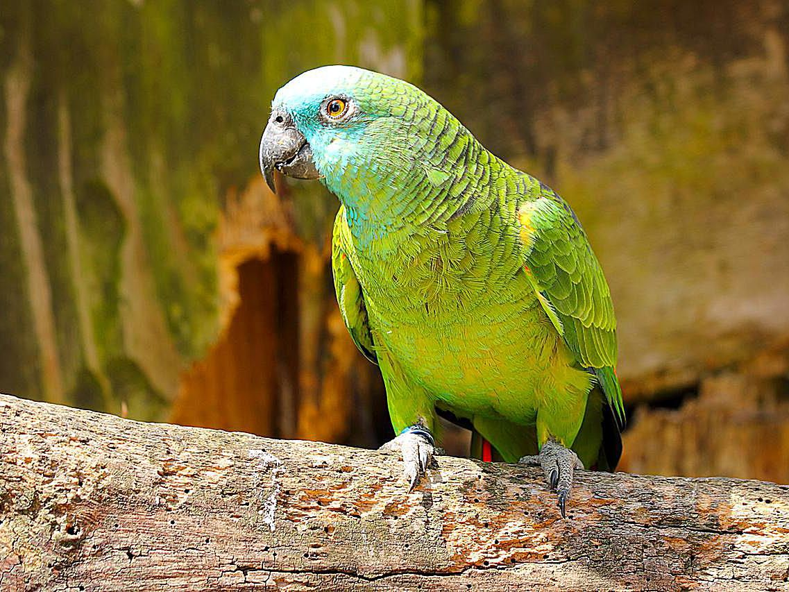 How Long Do Parrots And Other Pet Birds Live