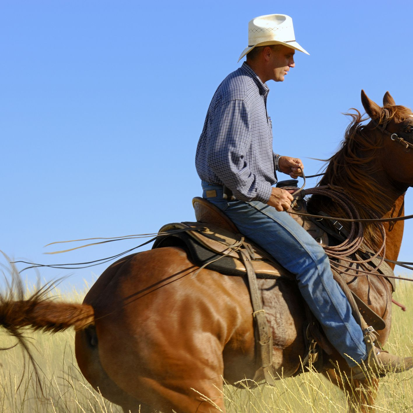 6 Common Western Horse Riding Bits