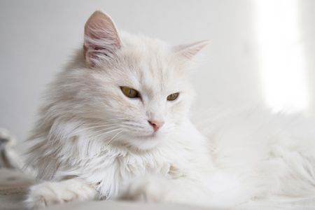 Difference Between Cat Hair And Fur, Types Of Cat Fur Coats