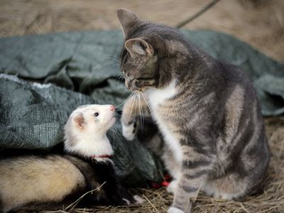How to Live with Ferrets and Other Pets