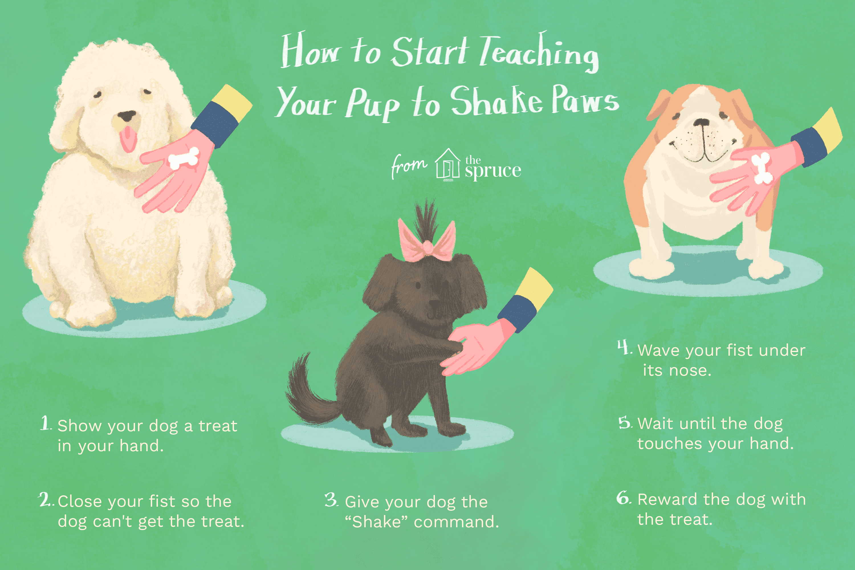 An illustration showing how to train a dog to shake paws