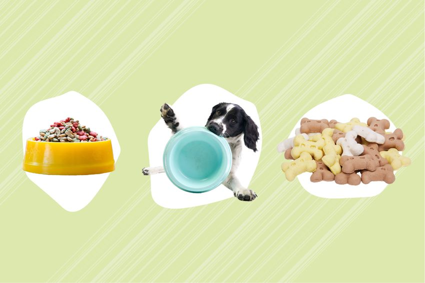 Best Dog Food Delivery Services