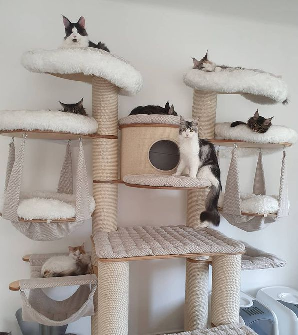 Multiple cats lounging in a large cat tree.