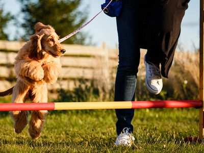The 7 Best Dog Training Books of 2019