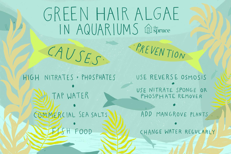 Algas de pelo verde en acuarios: causas y prevención