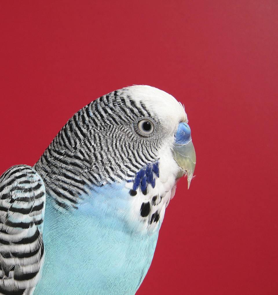 bird's beak and cere