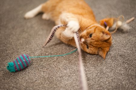 How to Play With Your Cat for Feline-Human Bonding