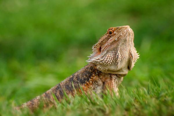beaded-dragon