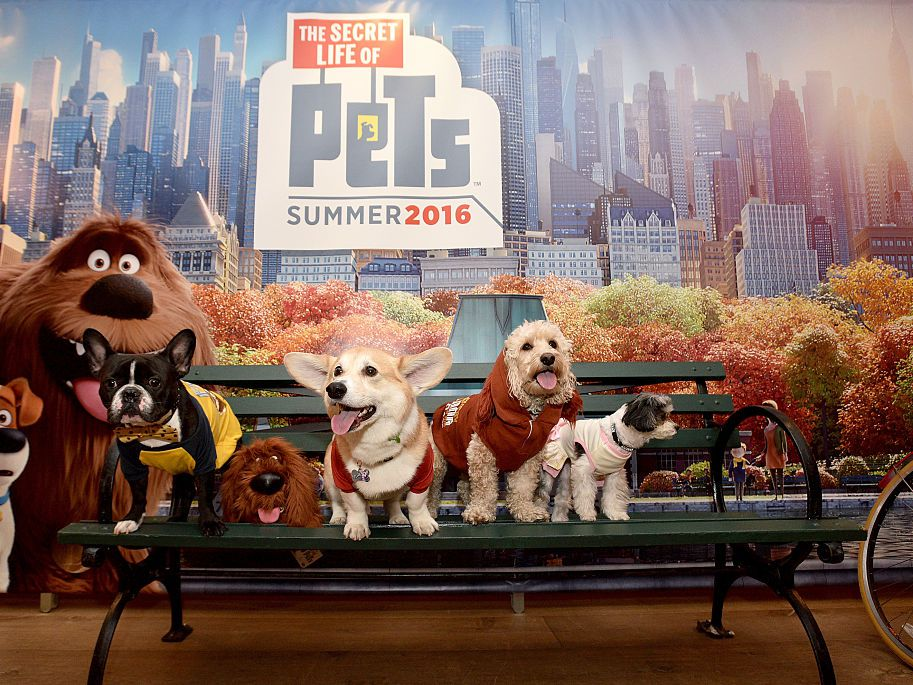 9bd9e6635a85 The Pets in