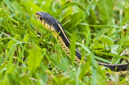 How to Treat Snake Bites on Dogs
