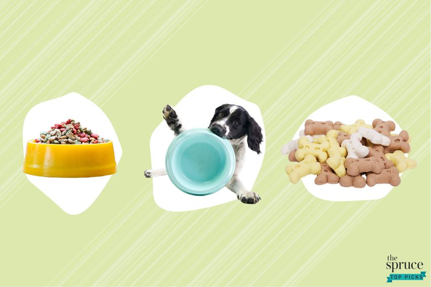 Photo composite of a dog food bowl, a dog holding a food bowl, and dog treats over a green background.