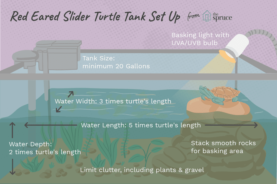 How to set up a red eared slider turtle tank