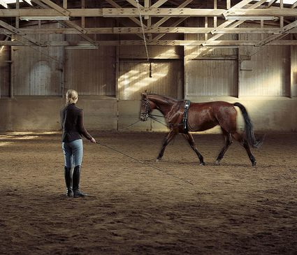 Woman leading a horse around an area and practicing lunging.