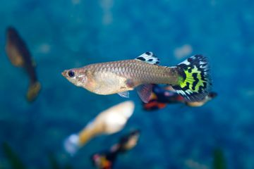 11 Top Fish Species For Cold Freshwater Aquariums