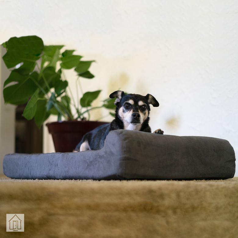 Big Barker Headrest Edition Dog Bed